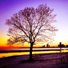 Laurie: tree at sunrise