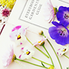 Melmo: flowers and book