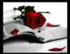 ibloodrose4 userpic