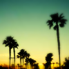 Palm Trees by neke