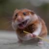 omnom hamsteri