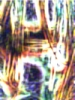 postautumn userpic