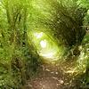 Pyry: path