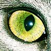 cats - castiel's eye