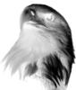 Орел ЧБ