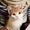 「猫」yhellothar