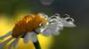 cuento_de_hadas userpic
