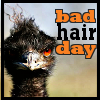 alligator138: Bad Hair Day