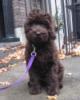pup on purple leash