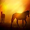 Hearts: Ranch Horses