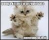 star wars, kitty, wampa