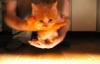forok userpic