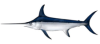 rbibafish userpic