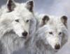 я, волк, семья