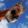 horse78 userpic