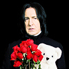 morethansirius: Snape - roses and teddy bear