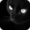 aaa_mazing: black cat