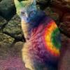 hippiekatt userpic