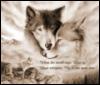 Wolf-Love-Lupa&gothicWolf