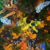 Busselton coral