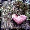 sara_merry99: TS Blair Just Kissed