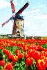 historicholland userpic