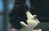 8bit plastic love machine: angel - running like a dork