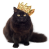 Кошка в короне