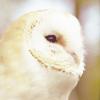 blind_maiden: owl