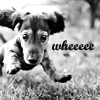 fififolle: doggy - wheeeeee