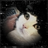 krackedhead userpic