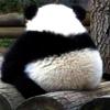 panda_pengu userpic