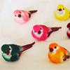 color birdies
