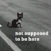 cat-here