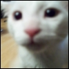 xpinkneko: pic#116117147