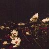 stock - flowers