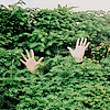 grass hands