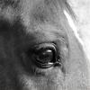 Panique's oog