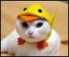 кот-утёнок