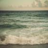 Чайка над морем: seashore