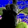 ssestrenka userpic