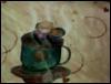 TIMOP2, cuddle cup