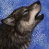 greywolf77