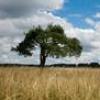 galina_fn: дерево
