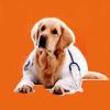 doggiedocs userpic