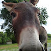 Why the long face?, Donkey