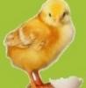 pticefabriki userpic