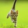 бежит-летит котик