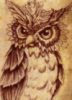 fuzzy_owl