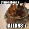 Rabbits Allons-y!